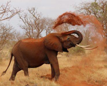 Mikään ei ole niin ihmeellinen kuin luonto ja eläimet. Katso Listafriikki.comin Top 10: Eläinmaailman omituisia faktoja.