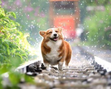 Tiedämme niin kovin paljon parhaasta ystävästämme, mutta nyt Listafriikki yrittää esitetllä sellaisia faktoja koirista, jotka pääsevät yllättämään.