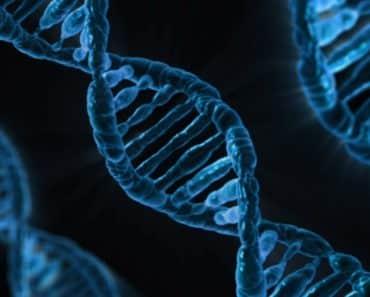 DNA:n rakenne julkaistiin huhtikuun 25. päivänä vuonna 1953. Sen, ja ihmisen koko genomin selvittämisen kunniaksi, tänään vietetään kansainvälistä DNA:n päivää. Perimän tutkiminen tuo elämäämme suuria mahdollisuuksia, mutta myös uhkia.