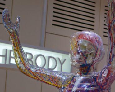Ihmiskeho reagoi asioihin kummallisilla tavoilla. Nyt Listafriikki esittelee elimistömme 10 omituista reaktiota sekä syyt niiden takana.