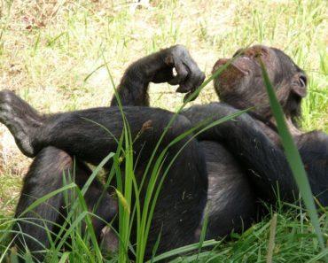 Näistä eläimistä ei ensisilmäyksellä uskoisi, että ne ovat hengenvaarallisia, mutta sitä ne todella ovat. Kirjaa ei tässäkään kohtaa kannata arvostella kansien perusteella.