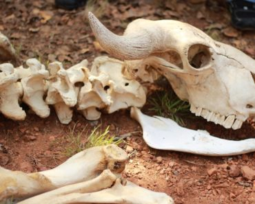 Listafriikki esittelee nyt 10 kummallista eläinten joukkokuolemaa. Vaikka ne eivät ole merkki maailmanlopusta, niin jotain mystistä näihin tapauksiin liittyy.