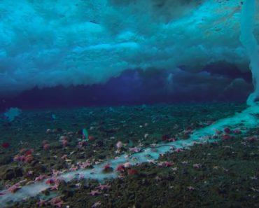 Maailman merissä on vaikka mitä ihmeellisyyksiä. Tänään Listafriikki tutustuttaa lukijansa niistä kymmeneen.