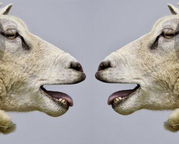 Eläinten viestintä ei ole ollenkaan niin yksinkertaista, kuin äkkiseltään voisi luulla. Listafriikki esittelee nyt 10 erikoista kommunikaatiotapaa.