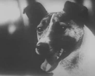 Marraskuun 3. päivänä vuonna 1957 tehtiin historiaa, kun Laika-koira lähetettiin Maata kiertävälle radalle ensimmäisenä elävänä olentona. Sen sankaritarina ei kuitenkaan päättynyt onnellisesti.
