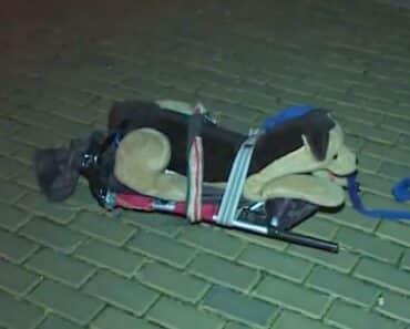 Oudoimmat uutiset kertoo tällä viikolla muun muassa miehestä, joka määräysten vastaisesti ulkoilutti koiraansa. Kielletyksi toiminnan teki se, että koira oli pehmolelu.