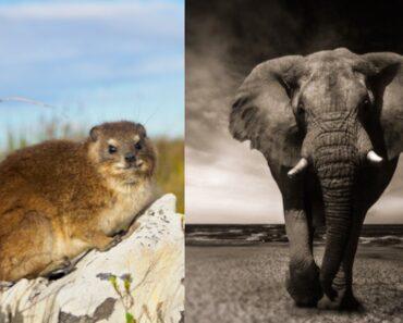 Eläinten lähimmät sukulaiset eivät aina ole niitä, jotka päällisin puolin näyttävät samalta. Tässä kymmenen ällistyttävää sukulaista.