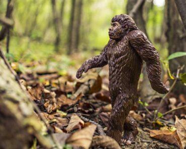Oudoimmissa uutisissa esitellään käsittämätön lakiehdotus: Isojalkaa saa metsästää pian erillisellä luvalla.
