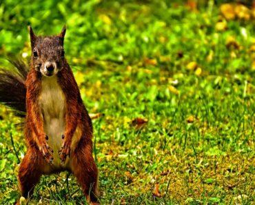 Listafriikin oudoimmissa uutisissa tällä viikolla muun muassa newyorkilaisia kauhun vallassa pitävät verenhimoiset oravat.