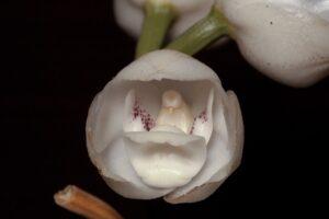 Tässä on kymmenen kukkaa, jotka näyttävät aivan joltain muulta kuin kasvinosalta.