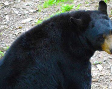 Oudoimmissa uutisissa tutustutaan naisen kauhun hetkiin, kun karhu hyökkäsi peräpäähän kesken vessareissun.