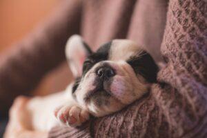 Oudoimmissa uutisissa tänään muun muassa ihmeeksi julistettu Skipper, kuusijalkainen koira!