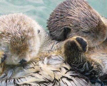 Tässä kymmenen hämmästyttävää nukkumistapaa eläinmaailmasta. Näilläkin tavoilla voi tirsat ottaa!