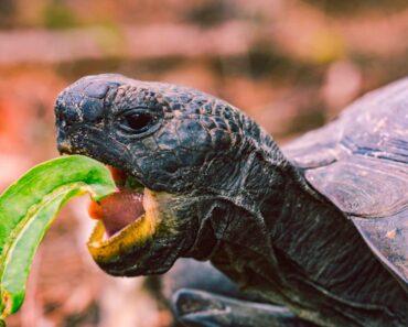 Oudoimmat uutiset kertoo tällä viikolla muun muassa kilpikonnasta, joka rysähti tuullilasin läpi suoraan matkustajaa otsaan.