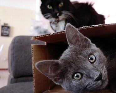 Tällä viikolla oudoimmissa uutisissa kerrotaan muun muassa siitä, miten paljon kissat rakastavat laatikoita. Oli niitä olemassa tai ei.