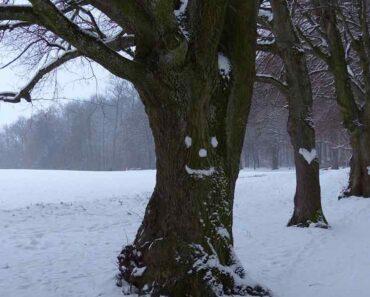 Puut ovat paljon kiinnostavampia kuin monet ajattelevat. Tässä kymmenen uskomatonta faktaa puista!