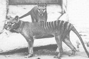Listalla esitellään viimeiset vilaukset kymmenestä sukupuuttoon kuolleesta eläimestä.