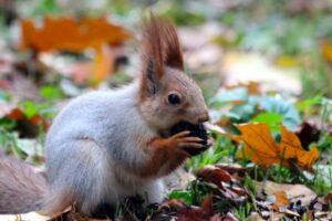 Miltä näyttää, kun orava säilöö autoon 160 litraa pähkinöitä?